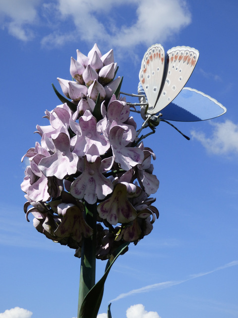 Orchid sculpture at Newton Aycliffe