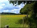 SO8690 : Wood Edge Path by Gordon Griffiths