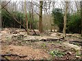 TQ7813 : Scrub clearance in Beauport Park, Hastings by Patrick Roper