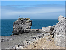 SY6768 : Pulpit Rock, Portland Bill by Gareth James