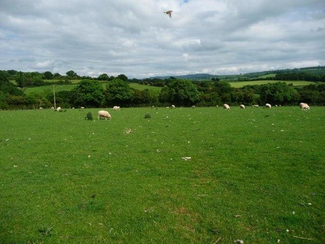 Sheep pasture, north of Road Farm