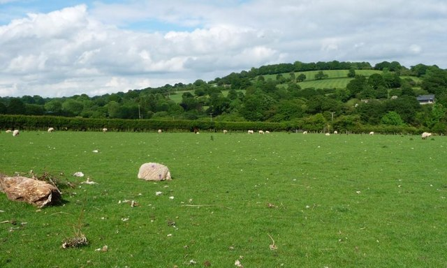 Sheep pasture between Walterstone and Road Farm