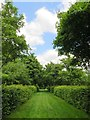TQ1772 : An avenue in the Wilderness by Steve Daniels