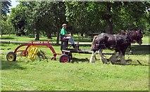 TQ1773 : Haymaking in Ham House Meadow by Steve Daniels