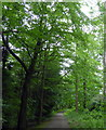 NZ1858 : Path in Snipes Dene Wood, Gibside by PAUL FARMER