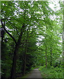 NZ1858 : Path in Snipes Dene Wood, Gibside by PAUL FARMER