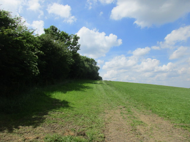 Field edge near Cockley Brake
