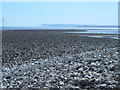 NZ5527 : Rocks exposed at low tide east of the South Gare Breakwater by Mike Quinn