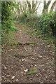 SW9871 : Path to Treneague by Derek Harper