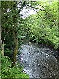 NZ1758 : River Derwent, Gibside by PAUL FARMER