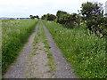 NU1342 : Footpath on Holy Island by PAUL FARMER
