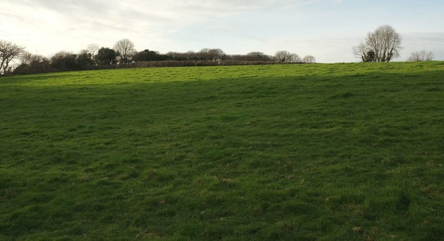 Field above Mill Pool Wood
