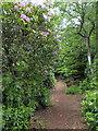 NU0701 : Path in Cragside by PAUL FARMER