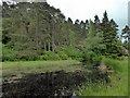 NU0701 : Lake, Cragside by PAUL FARMER