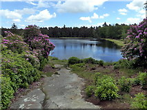 NU0702 : Nelly Moss Lake, Cragside by PAUL FARMER