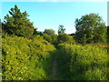TQ3996 : Public footpath on the edge of Epping Forest by Malc McDonald