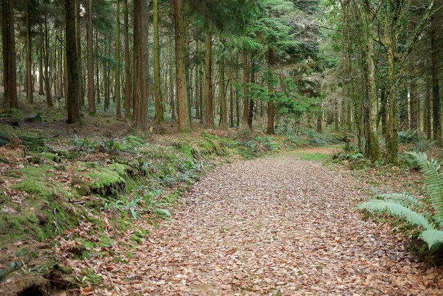 Track, Hustyn Wood