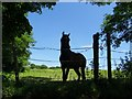 SD7412 : Horse at a fence by Philip Platt