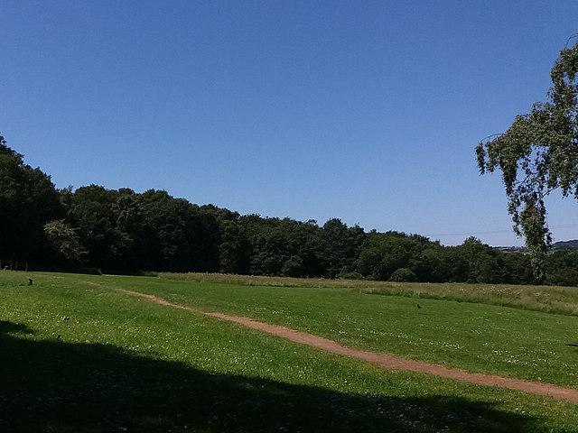 Open space in Bramley Fall Woods
