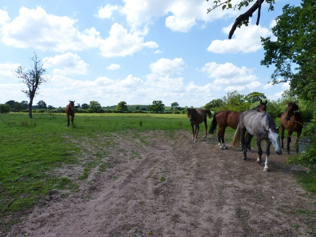 Horses in a field at Hanbury, Worcestershire