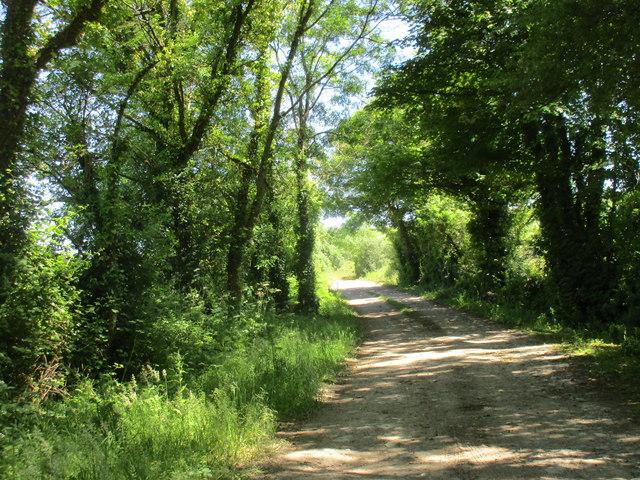 Farm track near Cloyne