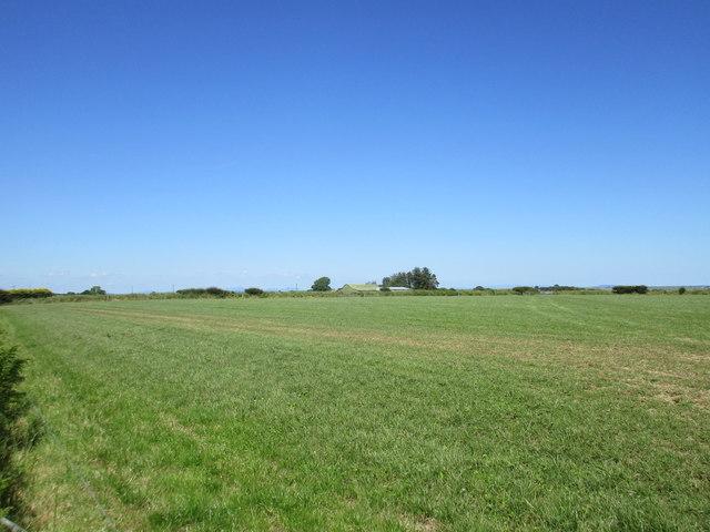 Grassland near Ballyroe
