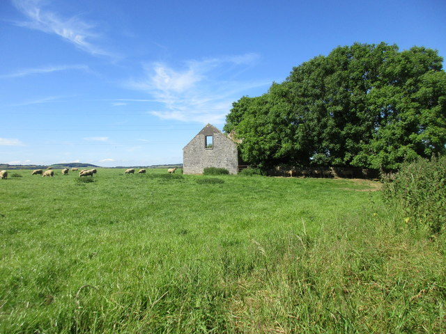 Sheep and ruined barn