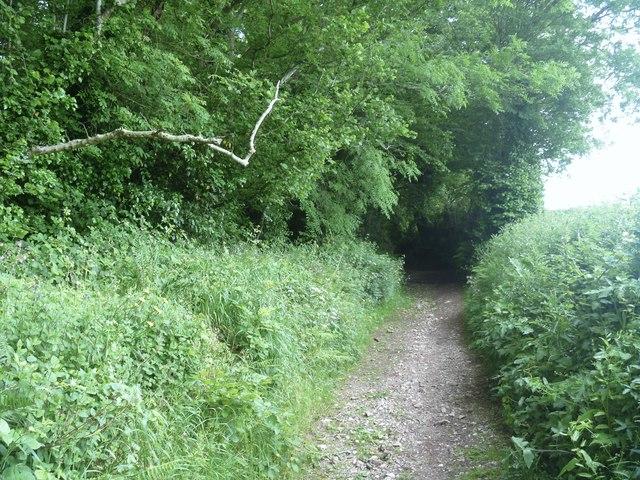 Haldon Lane [2]