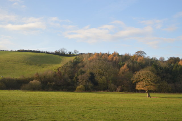 Woodland in the Culm Valley