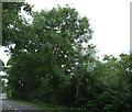 TF8300 : Woodland beside the A1065, Hilborough by JThomas