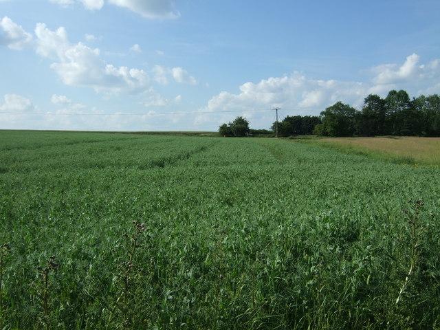 Crop field off Wymondham Road
