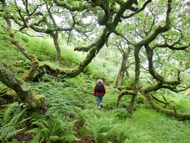 In the ancient oakwood above Eilean Olmsa III