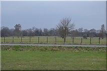 TQ1776 : Thames Path, Syon Park by N Chadwick