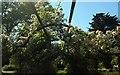 SX9265 : Rose pergola, Tessier Gardens by Derek Harper