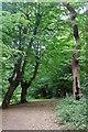 TQ3891 : Hornbeam Pollards & Hollow Oak, Walthamstow Forest by Glyn Baker