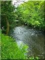 NZ1759 : River Derwent at Gibside by PAUL FARMER