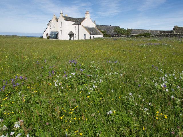 Wildflower meadow, Oronsay