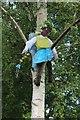 SH7863 : Fairy up a tree by Richard Hoare