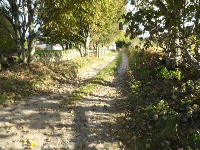 A lane eastwards past Mains of Shiels