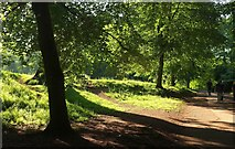 SX8963 : Path near Cockington Court by Derek Harper
