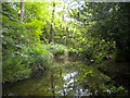 SK1000 : Stream in Hill Hook Nature Reserve by Richard Vince