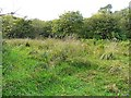 NY2061 : Grassland, Bowness-on-Solway Nature Reserve by Rose and Trev Clough