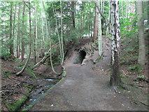 NO2307 : Tunnel on Maspie Den Path, Lomond Hills by Bill Kasman