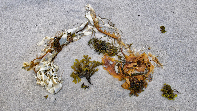 Nature's artistry - as found at Port a' Chapuill
