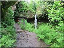 NO2306 : The Yad Waterfall, Maspie Den, Lomond Hills by Bill Kasman