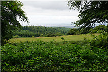 ST1636 : The eastern side of Great Hill by Bill Boaden