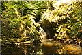 SH5573 : The Afon Cadnant at Plas Cadnant Gardens by Jeff Buck
