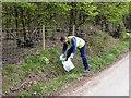 TQ7819 : Volunteer litter picker in Hurst Lane, Sedlescombe by Patrick Roper