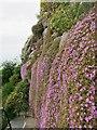 SW5129 : St Michaels Mount garden by Oast House Archive