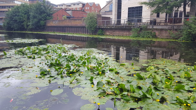 River near the York Castle Museum